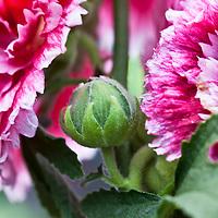 Botanical: All GreenFuse Botanical Photos