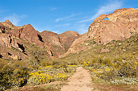 Arch Canyon in Organ Pipe Cactus National Monument