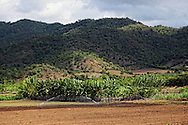 Farming on the south coast of Cuba between Pilon and Santiago de Cuba.