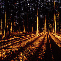 Pierrefond forest (France) at sunset.