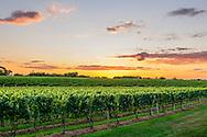 Sunset, Wolffer Estate Vineyards, Sagaponack, Long Island, New York