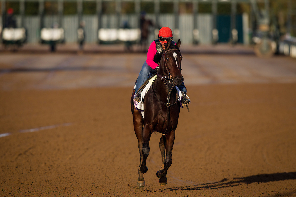 October 29, 2015:  Ma Can Do It, trained by Dale L. Romans and owned by Kyle W. Nagel, exercises in preparation for the The 14 Hands Winery Breeders' Cup Juvenile Fillies at Keeneland Race Track in Lexington, Kentucky. Alex Evers/ESW/CSM