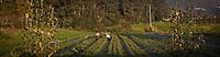 Quinta da Manguela, com mais de 300 anos, foi recuperada e especializou-se na produ&ccedil;&atilde;o de plantas arom&aacute;ticas, medicinais e condimentares em modo biol&oacute;gico, respeitando os princ&iacute;pios de n&atilde;o agress&atilde;o dos solos agr&iacute;colas, do meio ambiente e recorrendo a processos de secagem tradicionais e naturais.<br /> Promovemos tamb&eacute;m uma pr&aacute;tica de consumo sustent&aacute;vel dos nossos produtos incentivando a op&ccedil;&atilde;o de embalagens de recarga de baixo custo e f&aacute;cil reciclagem, convidando os clientes a depositarem as nossas ervas secas em recipientes reutilizados.<br /> S&oacute; respeitando todos estes pressupostos ambientais e sociais, chegaremos ao consumidor de consci&ecirc;ncia limpa e com as melhores infus&otilde;es e condimentos.