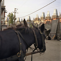 A horse stands tethered to a traditional Roma cart, in the courtyard of a house on the main road that runs through the Roma camp of Sintesti. The houses have all been built within the past 7 years as the Roma have acquired wealth through scrap metal dealing..