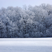 Hoarfrost on trees off of County Rd I southwest of DeForest in Dane County, Wisconsin.