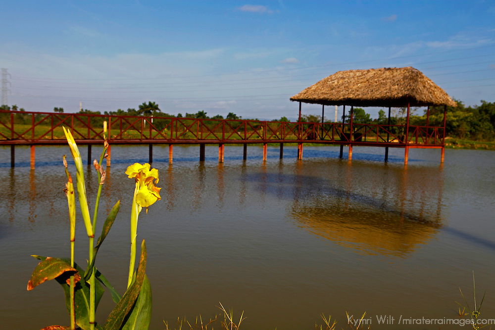 Central America, Cuba, Pinar del Rio. Rural pond with shaded dock.