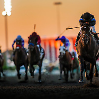 Shared Belief ridden by Corey Nakatani wins the Cash Call Futurity on December 14, 2013 at Betfair Hollywood Park in Inglewood, California. Shared Beliefe is a leading contender for the 2014 Kentucky Derby (Alex Evers/ Eclipse Sportswire)