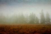 Row of trees in the fog. Hohes Venn, High Fens, Belgium,Hautes Fagnes