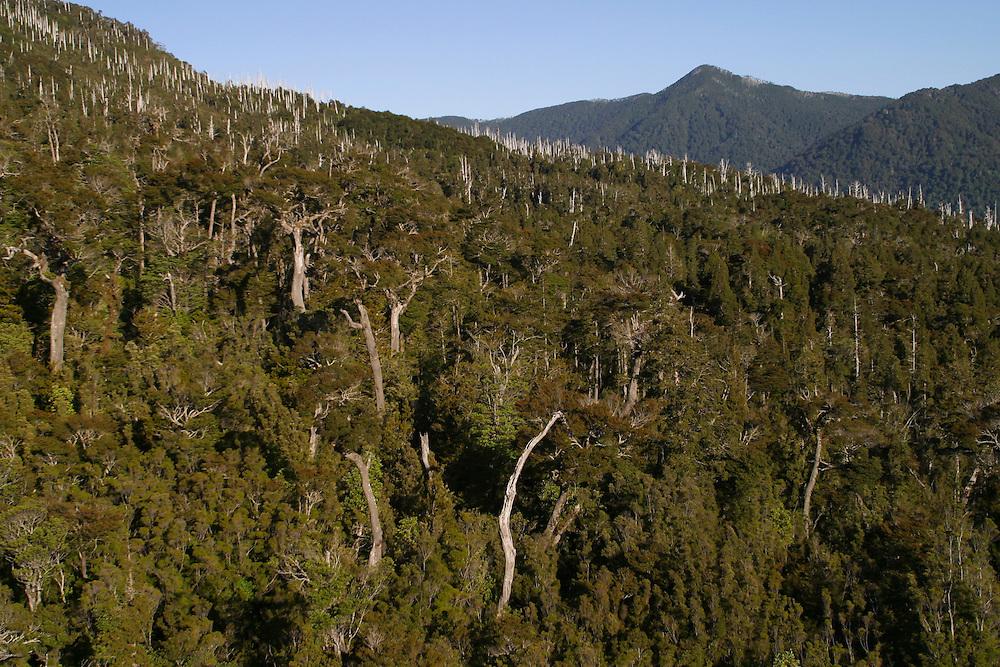 Forestland which burnt six years earlier near Puerto Montt, Chile, Feb. 12, 2004. Daniel Beltra/Greenpeace.