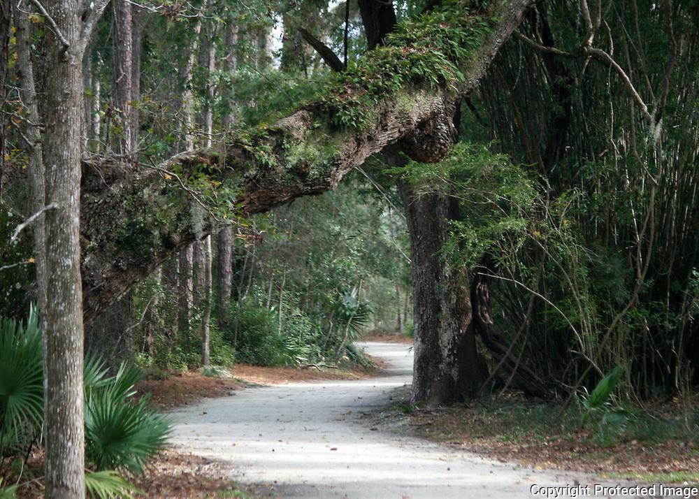 A bike path through giant Jekyll Island Oaks, bamboo and palmettos.