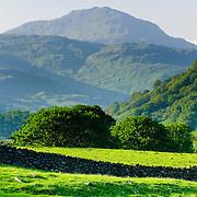 Green pastures of Glen Falloch Scotland