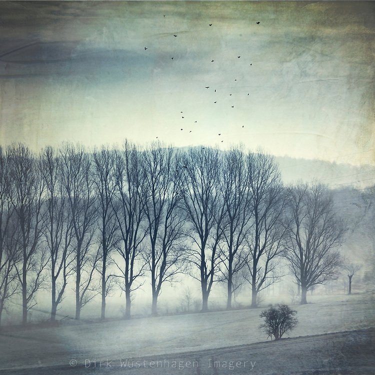 Rural landscape on a frosty and foggy late winter morning - textured photograph<br />
