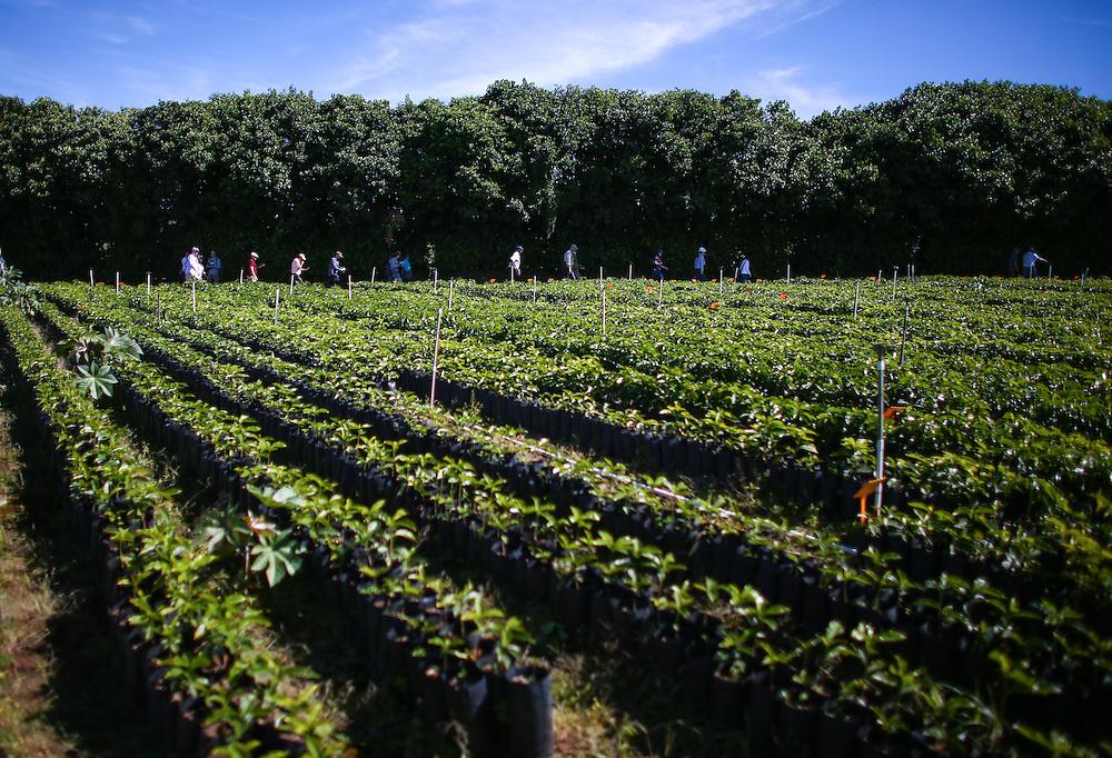 Origin experience partners walk through the Hacienda Alsacia coffee tree nursery is shown during the 2016 Starbucks Origin Experience for Partners. Photographed in January 2016. (Joshua Trujillo, Starbucks)