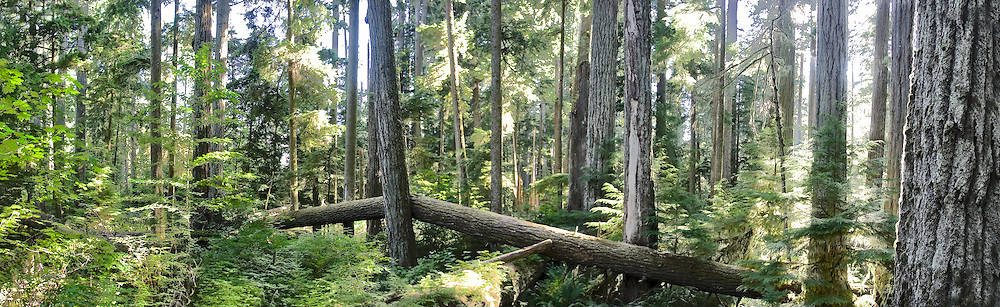 nature photography,landscape, forest,travel,Canada,