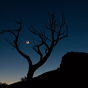 A bare tree frames the crescent moon and the Guadalupe Mountains in Guadalupe Mountains National Park, Texas. Guadalupe Peak, seen in silhouette, stands 8,751 feet (2,667 meters), making it the highest point in Texas.
