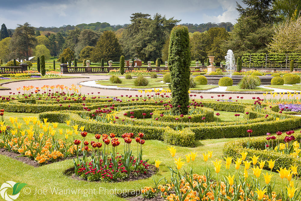 Tulips bloom in the Upper Flower Garden at Trentham Gardens, Staffordshire, photographed in May.