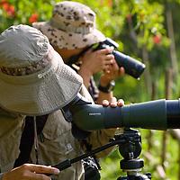 Birders looking for pheasant-tailed jacana at Zhou-Zai Wetland Park.