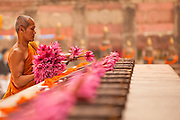 A Buddhist monk places lotus blossoms on a shrine marking the the site where the Buddha performed walking meditation following his enlightenment.