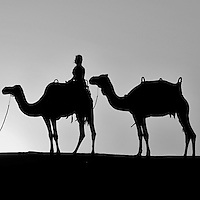 A desert safari is an exhilarating way of discovering Dubais natural beauties. Camel ride at sunset. Dubai Conservation Desert Reserve. Camels are a way of transportation, and are also used for racing at the popular Dubai Camel Racecourse. Dubai. United Arab Emirates.