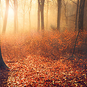 Forest floor in backlight with some leaves still on small trees - texturized photograph