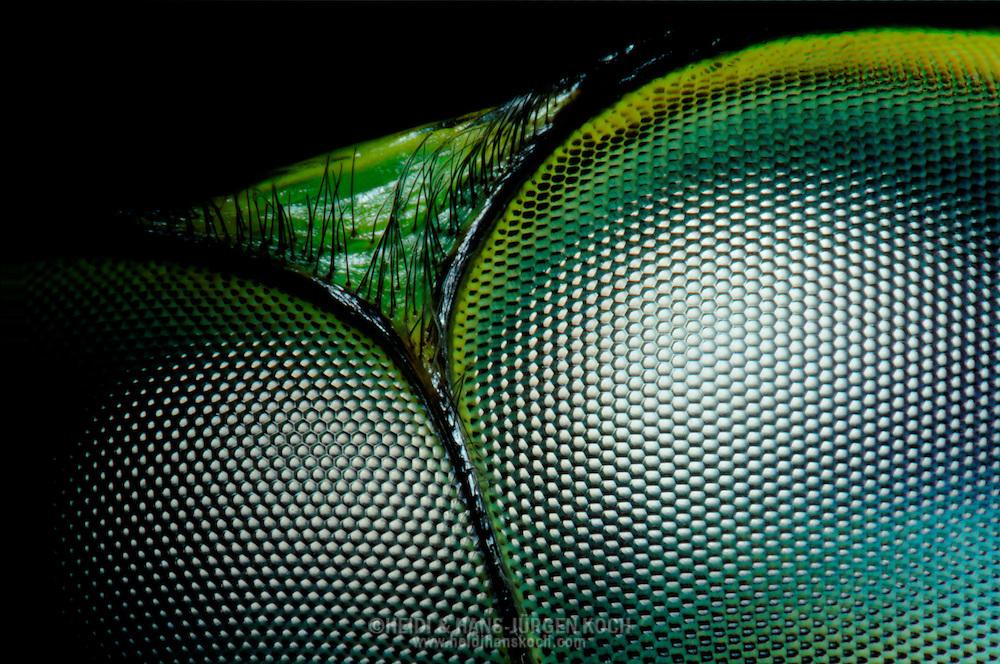 Pin wallpaper libelle im spreewald on pinterest for Farbige kieselsteine