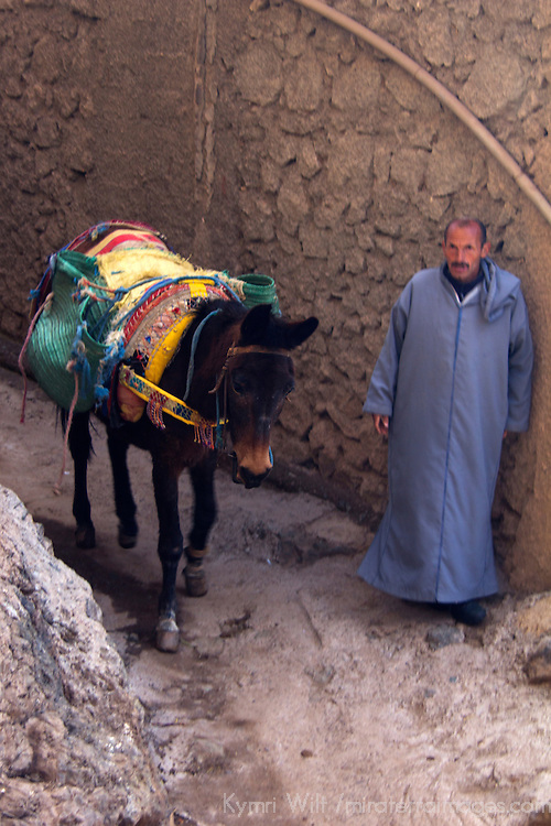 Africa, Morocco, Imlil. Donkey of Berber village in Imlil, Atlas Mountains.