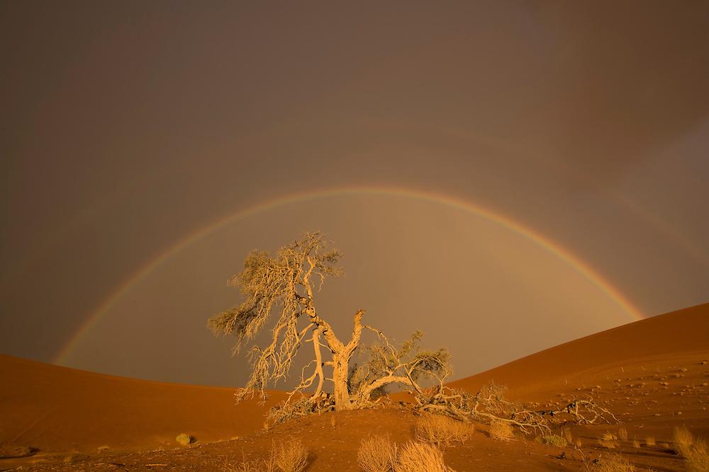 Africa, Namibia, Namib Naukluft National Park, Rainbow and rain clouds above acacia tree branch in Namib Desert near Sossusvlei
