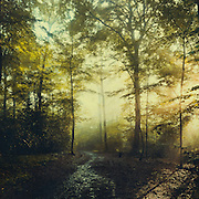 Hazy summer forest at sunrise after the rain