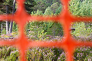 High visibility deer fencing can be used in areas of woodland where capercaillie and black grouse may be present.  By using this type of fence, it reduces the risk of these birds flying into the structures and dying.  Cairngorms National Park, Scotland.