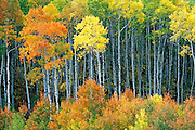 McClure Pass, Colorado