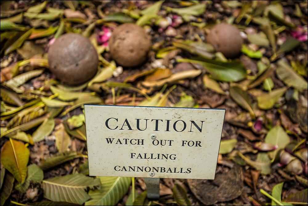 Cannonball warning sign at Foster Botanical Garden in Honolulu, HI. ©PF Bentley