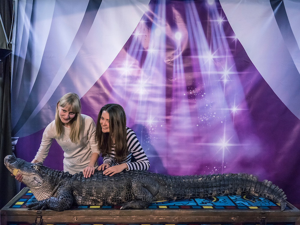 Women attending the Belarus State Circus pose for a picture with a crocodile named Marta on Wednesday, November 25, 2015 in Minsk, Belarus.