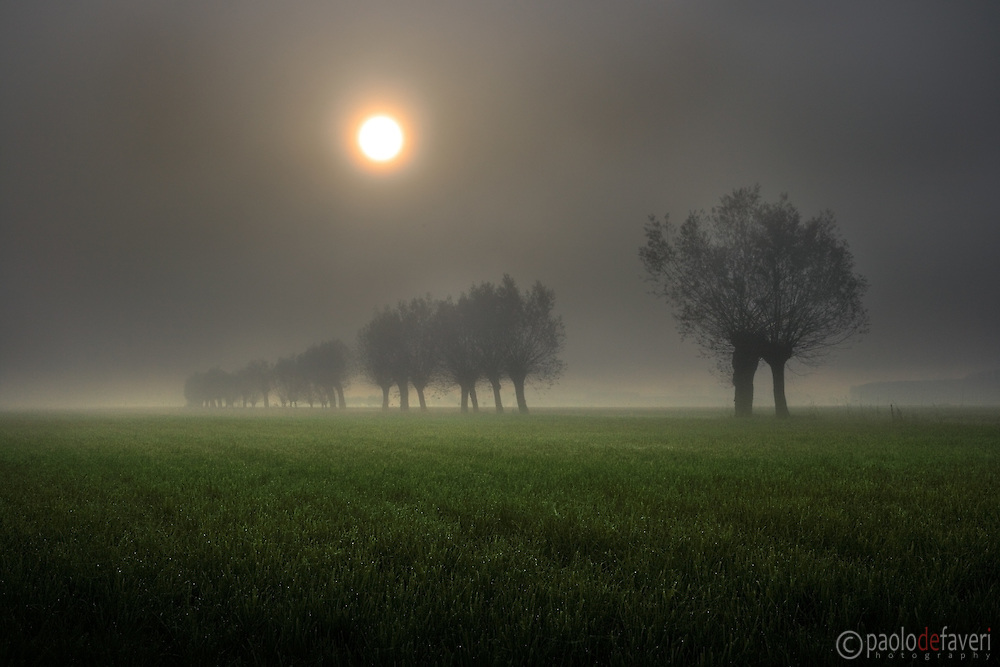 This is a row of willows that is not more than a 100 mt. far from my house, in the country side near to Scalenghe in Piedmont, Italy..I took this on a very early morning last november, 30 minutes after sunrise, while a thick fog was coming around, quickly obscuring the entire scene in just five minutes.