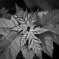 Metallic Leaves