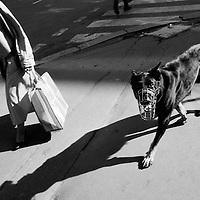 Dog with muzzle, Prague, Czech Republic