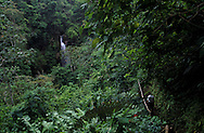 Hiking on the forest near Cerro Punta in Panama
