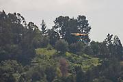 A red-tailed hawk (Buteo jamaicensis) hunts in Tilden Regional Park near Berkeley, California.