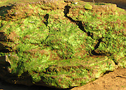 Chattahoochee River boulder covered with green algae.