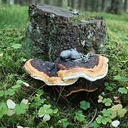 Mushrooms on trees