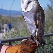 Arizona: Sonoran Desert Museum, Tucson