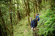 Three hikers walk through a lush Taiwan mountain forest filled with moss and ferns.