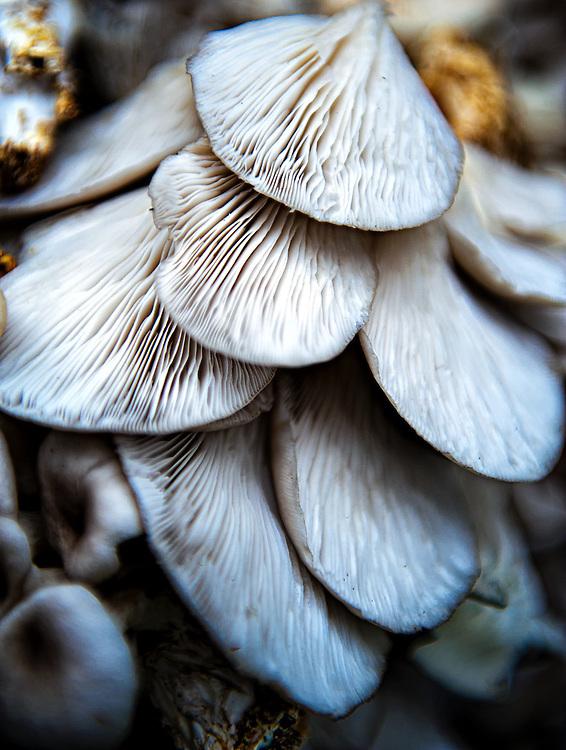 Wild mushrooms.