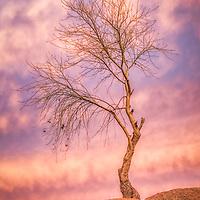 Tree on Watson Lake Arizona photographed after sunset.