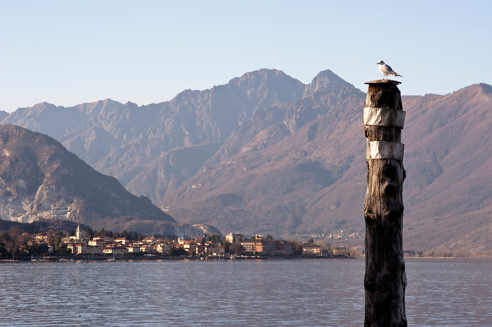 A segull resting on a pile in Lake Maggiore, Italy