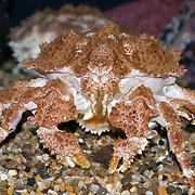 Crab, at the Oregon Coast Aquarium, Newport, Oregon
