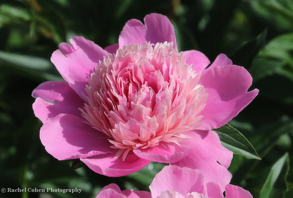 &quot;Arianna&quot;<br />