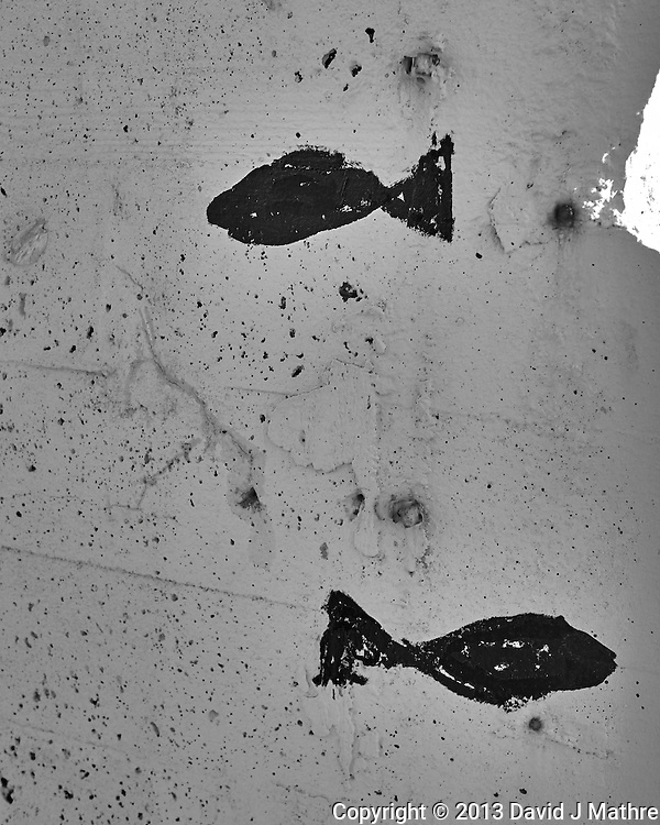 Fish graffitti in Tromsø, Norway. Image taken with a Leica X2 camera (ISO 100, 24 mm, f/5.6, 1/100 sec). Raw image processed with Capture One Pro (including conversion to B&W).
