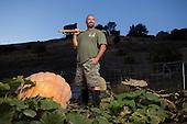 Don Davis –Pumpkin Harvester