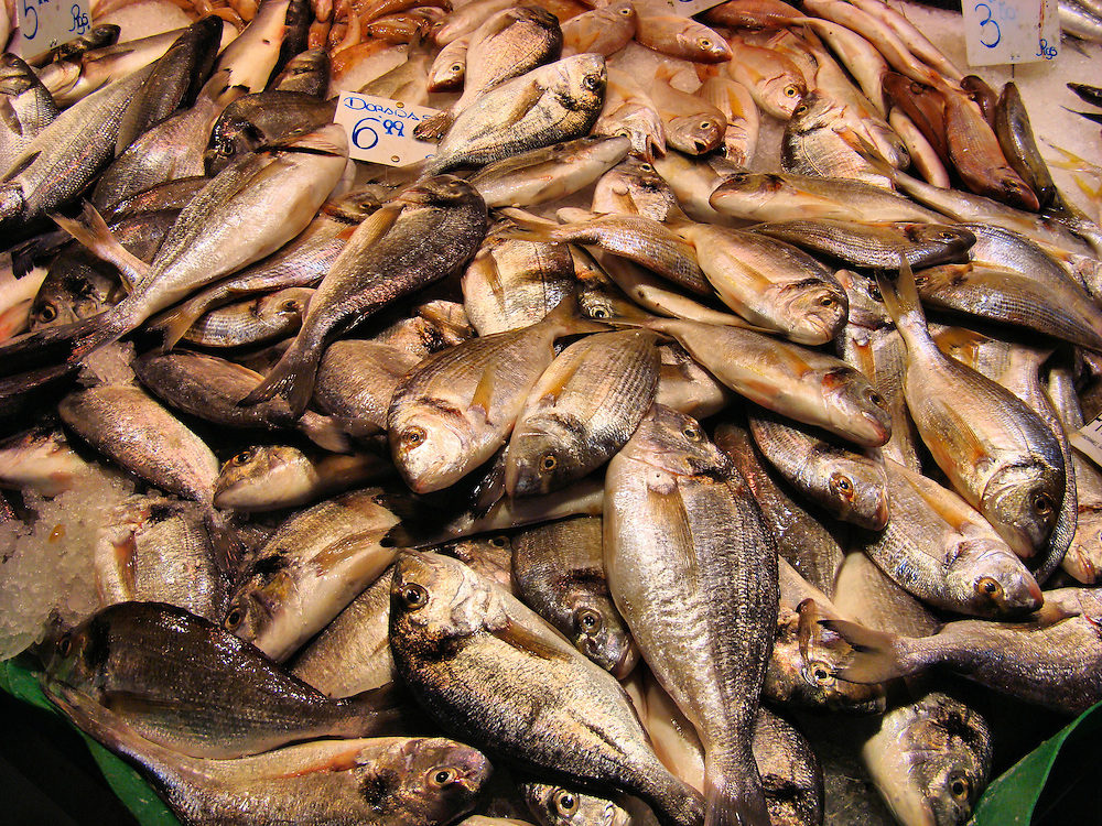 Spanish dorado fish on ice at la boqueria market in for La fish market