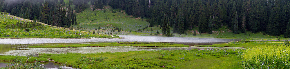 A photographer photographs wildflowers on the shore of Tipsoo Lake in Mount Rainier National Park in Washington State, USA.